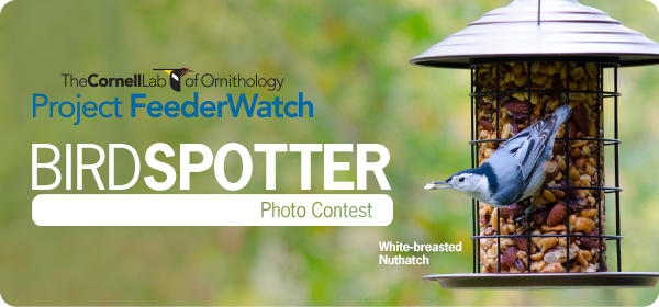 We're Sponsoring Project FeederWatch & BirdSpotter Photo Contest