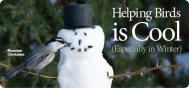 Winter - Helping Birds Is Cool